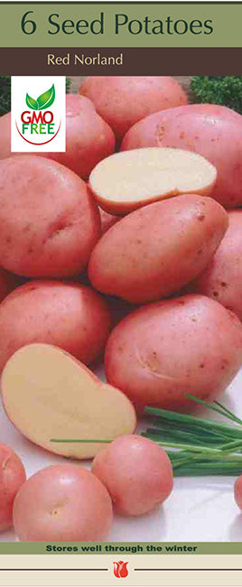 Potatoes 'Red Northland'
