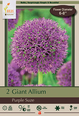 Allium Purple Suze