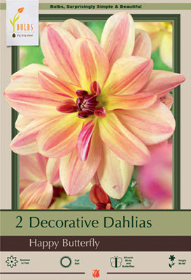 Dahlia - Happy Butterfly