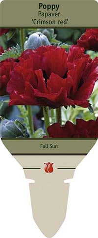 Papaver Orientale Crimson Red