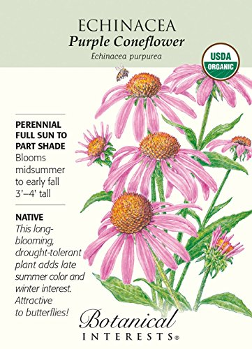 Echinacea 'Purple Coneflower'