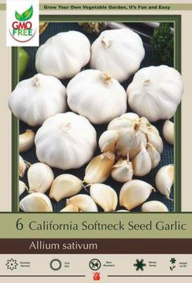 Garlic 'California Softneck'