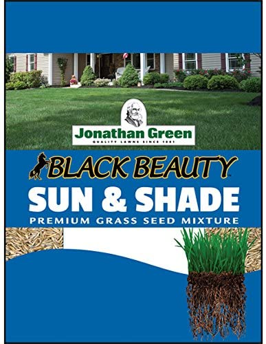 Black Beauty Sun & Shade Grass Seed
