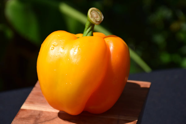 Pepper 'Golden Bell'