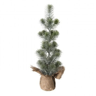 "Tree: 17"" White Spruce Seedling"