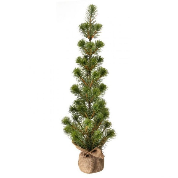 "Tree: 25"" White Spruce Seedling"