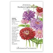 Zinnia 'Northern Lights Blend'