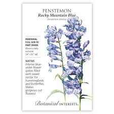 Penstemon 'Rocky Mountain Blue'