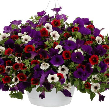 "Petunia 10"" Hanging Basket (Local Delivery Only)"