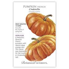 Pumpkin French 'Cinderella'