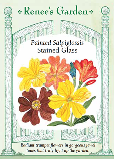 Salpiglossis 'Stained Glass'