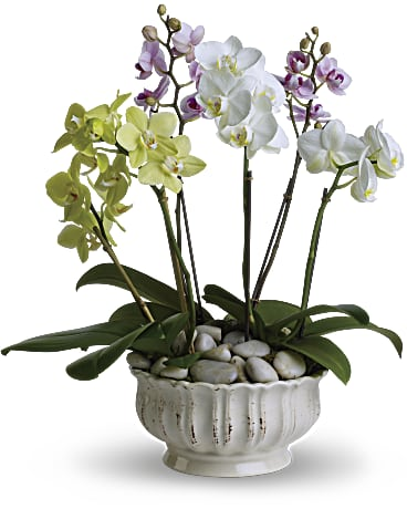 Teleflora Regal Orchids