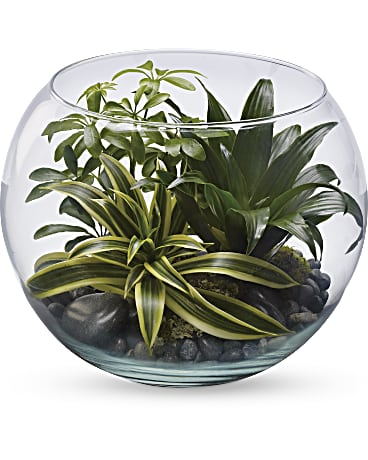 Sphere of Tranquility Terrarium by Teleflora