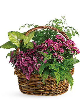 Teleflora's Secret Garden Basket