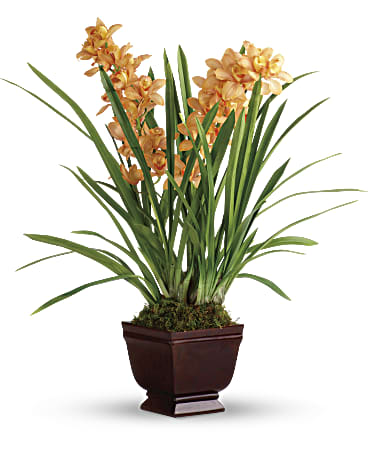 Regally Yours Orchid by Teleflora