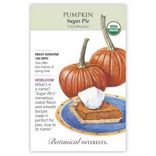 Pumpkin 'Sugar Pie'