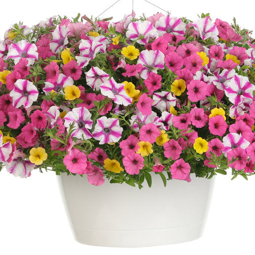 Hanging Basket: Sunglasses