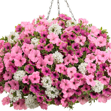 Vista Bubblegum Supertunia