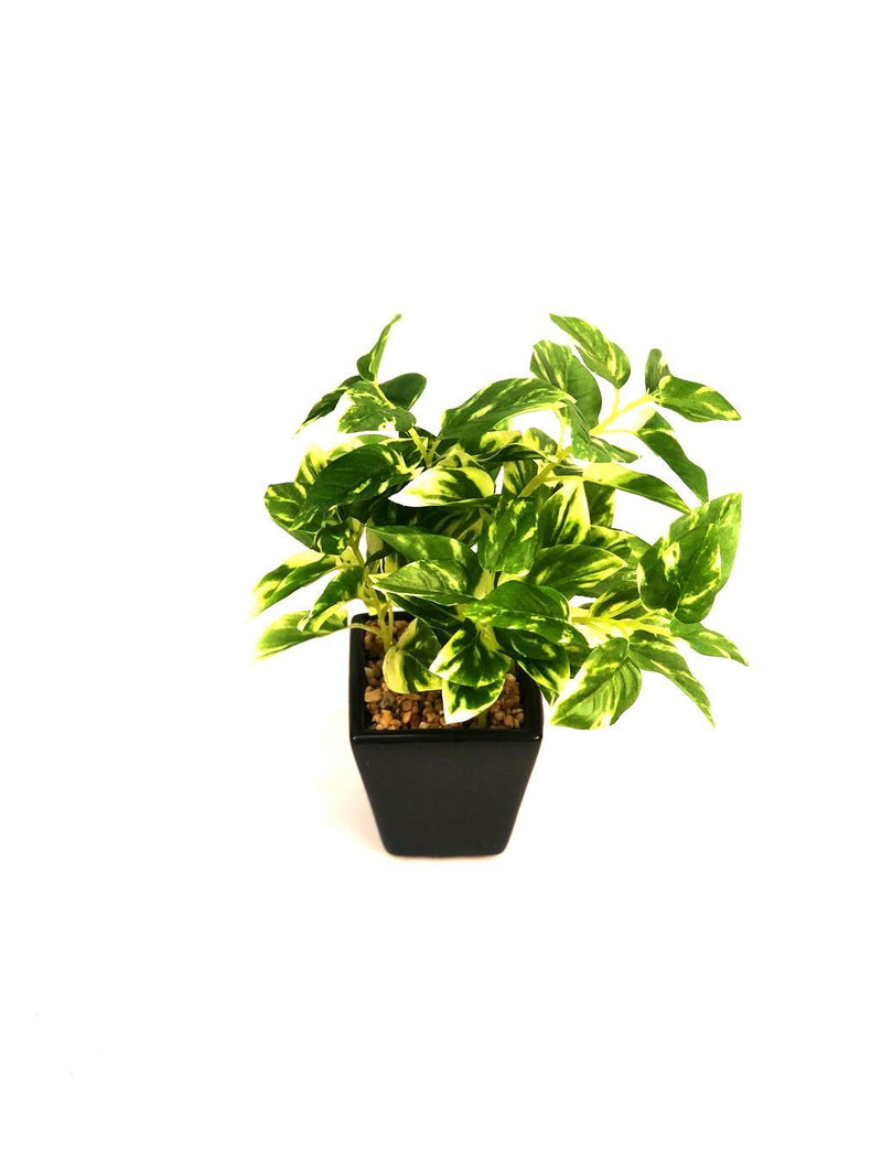 Sweet Little Indoor Plants Household Devil's Ivy Artificial Range Tamrapatra