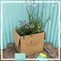 Combi Plant Box - Pre Paid Annually