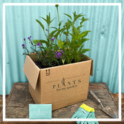Perennial Garden Box - One-Off