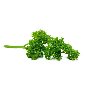 Freshly harvested Parsley from True Leaf Farms for your salads