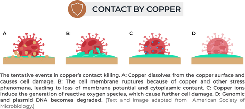 How Copper Kills Coronavirus