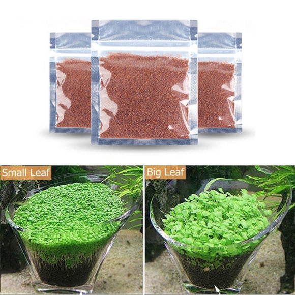 Aquarium Grass Seeds Water Aquatic Green Plants Decoration Easy Planting Fish Tank Landscape Ornament