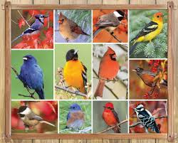 Songbirds 1000 Piece Interlocking Jigsaw Puzzle (Made in the USA)