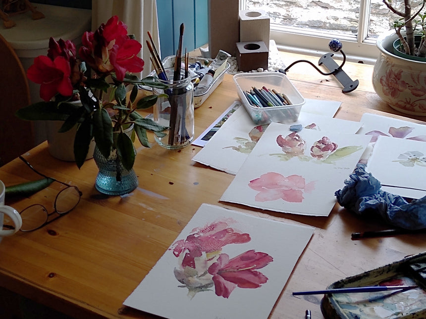 My temporary studio with the Rhododendron cutting.