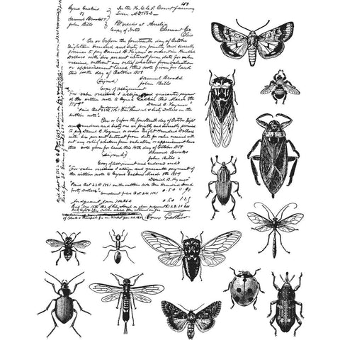 A wonderful collection of insects for the inner entomologist