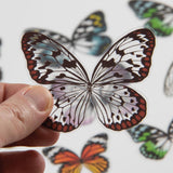 sample of Transparent Acetate Insect and Fairy Wings by Tim Holtz Idea-Ology