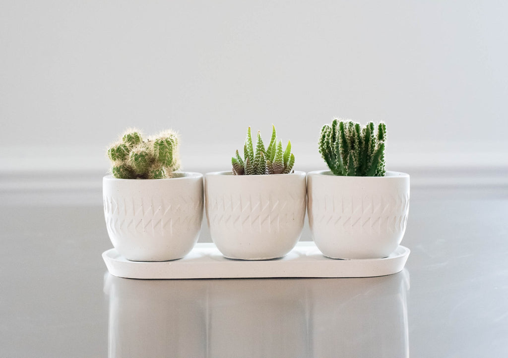 planter trio with drip tray
