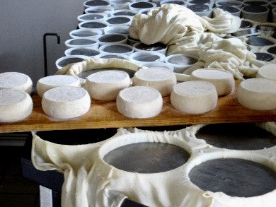 Reblochon cheeses just removed from their moulds