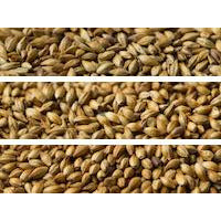 Gladfield Medium Crystal Malt - Three Chins Brewing