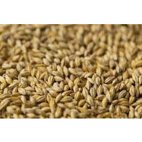 Gladfield Sour Grapes Malt - Three Chins Brewing