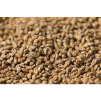 Gladfield Wheat Malt - Three Chins Brewing
