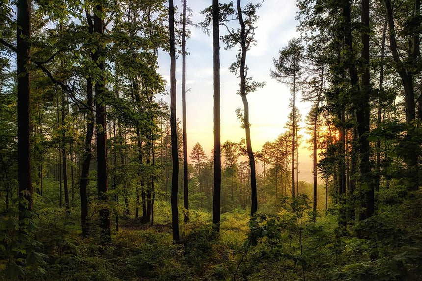 Discover Forest Bathing