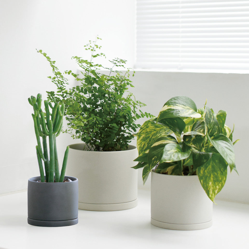 191 porcelain plant pot earth and dark grey styled with plants.