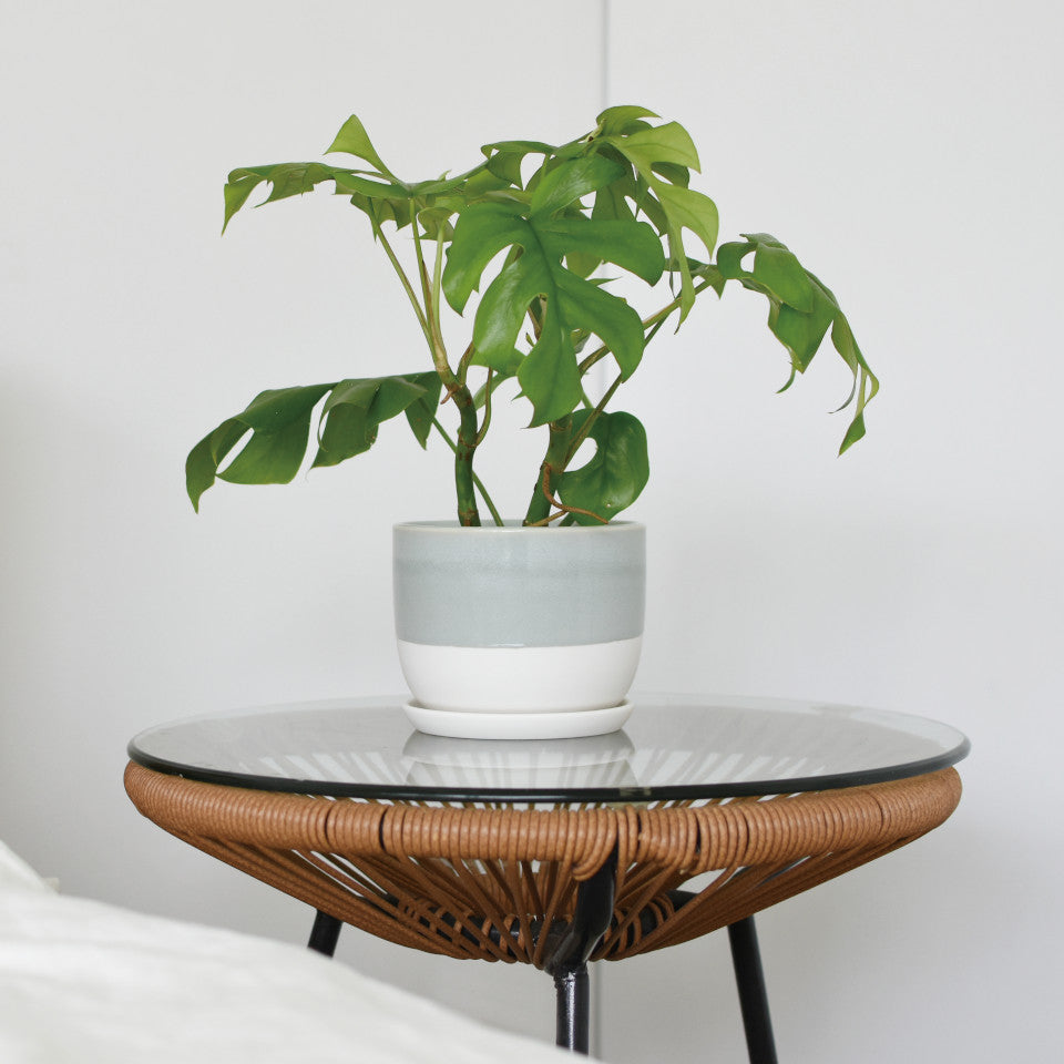 193 plant pot large, styled on a side table containing a Monstera plant..