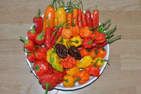 A platter of freshly harvested gourmet chillies grown by Professor Pods