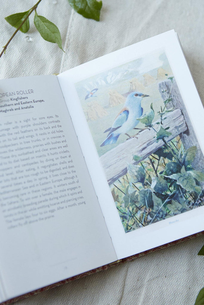 The Little Book of Birds - Patina Vie