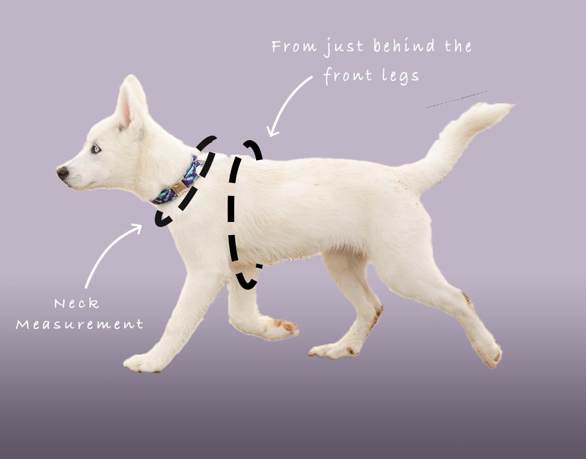 Geranium & Purple - Kerr Design - Dog Harness