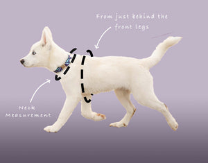 Lilac & Orange - Harris Design - Dog Harness