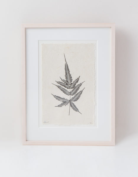 The Fern Botanical Photograph