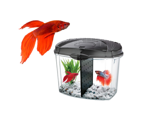 Kit Equipado Bowl + Pez Betta