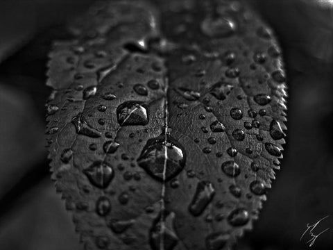 Droplets limited edition fine art print signed and numbered