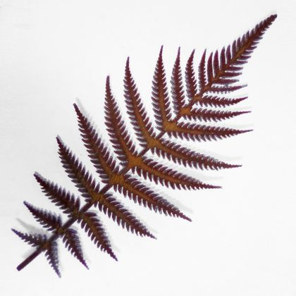 Ironweed - Rust Fern