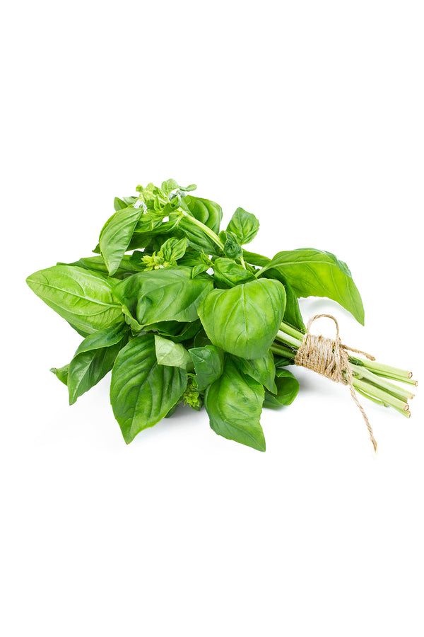 Basil Bunch
