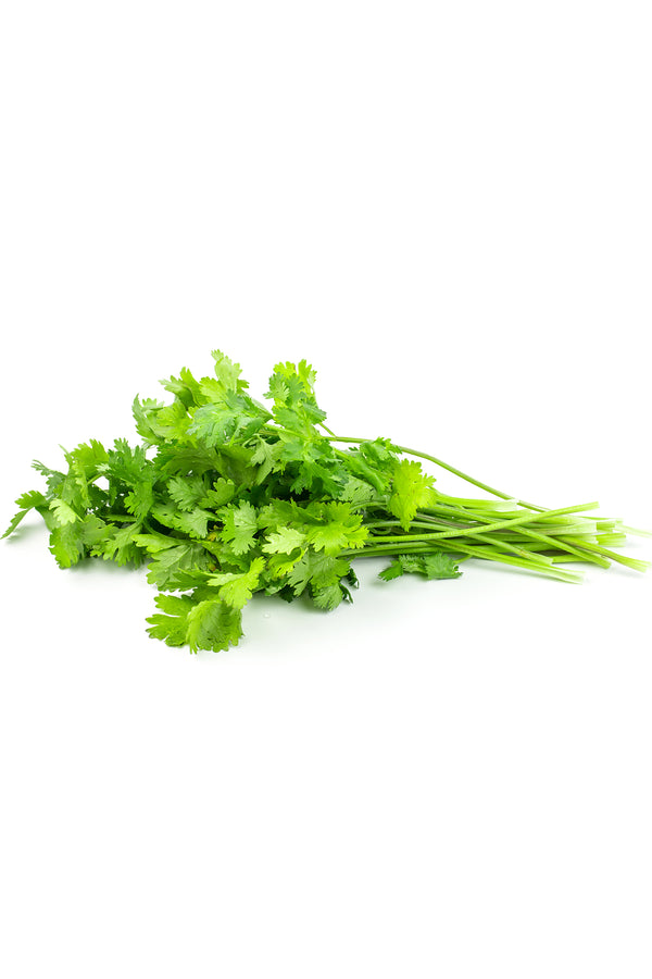 Coriander Bunch